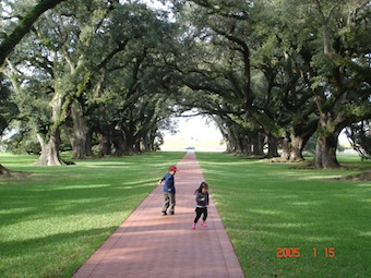 Oak allay plantation house